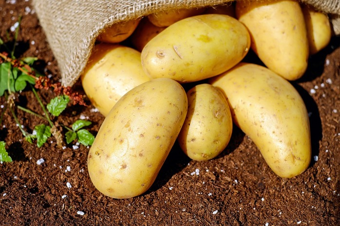 sack of potatoes in the dirt